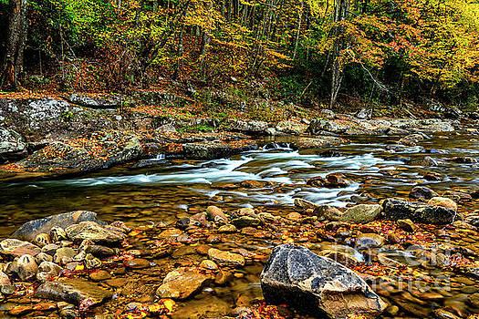 Fall Rain along Williams River by Thomas R Fletcher