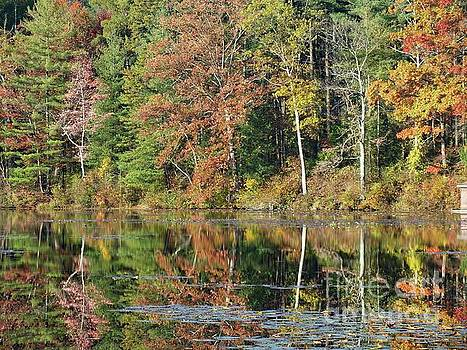 Cindy Treger - Fall Reflections - 1
