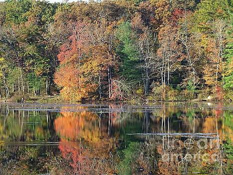 Cindy Treger - Laurel Lake Fall Reflections Three