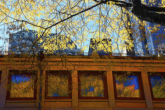 Fall Reflections  by Tim Ford