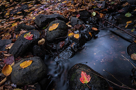 Fall River, Autumn Foliage at Mad River Peterson Park, Wolcott Connecticut by Skyelyte Photography by Linda Rasch