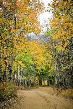Fall Road by Juli Ellen
