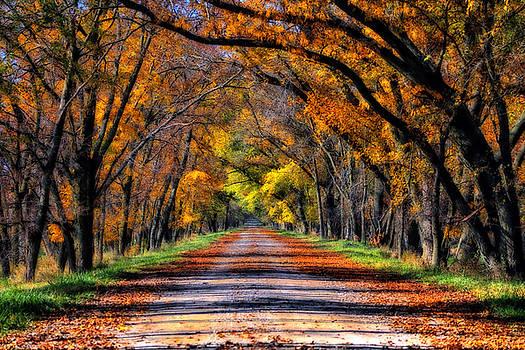 Fall Road by Steve ODonnell