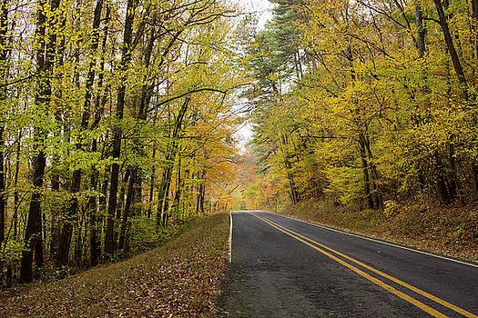 Fall Roads by Tammy Chesney