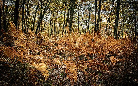 Fall Rust by Joe Shrader