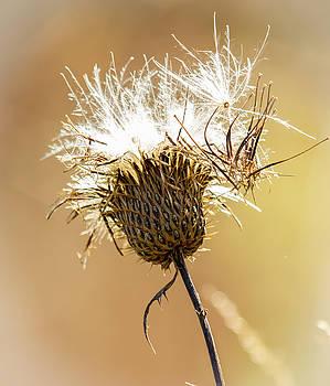 Fall Seed Pod by Deb Henman