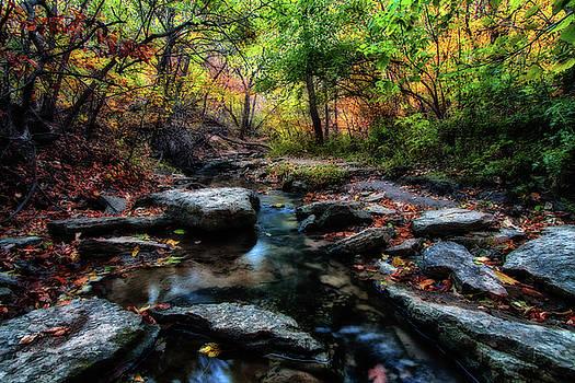 Fall Stream by Steve ODonnell