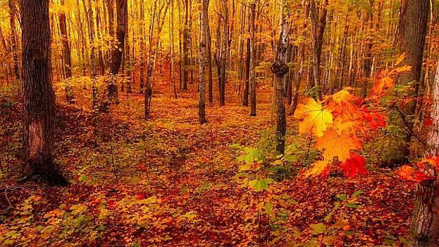 Fall Sugar Bush by Bryan Smith