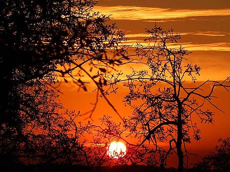 Fall Sunset by Susan Ince