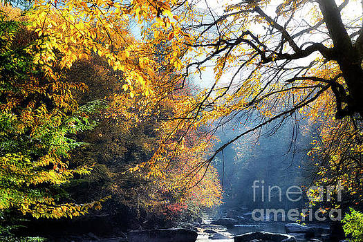 Fall Sunshine Williams River by Thomas R Fletcher