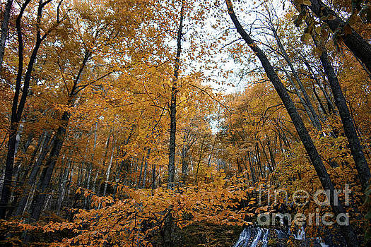 Fall Tees At  Yankee Horse Overlook   by Tom Gari Gallery-Three-Photography