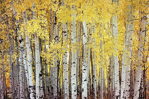 Saija Lehtonen - Fall Through the Aspens