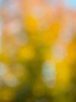 Pam  Elliott - Fall tree blur