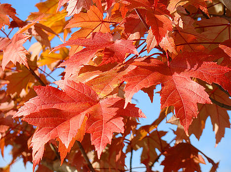 Baslee Troutman - FALL TREE LEAVES Art Prints Blue Sky Autumn Baslee Troutman