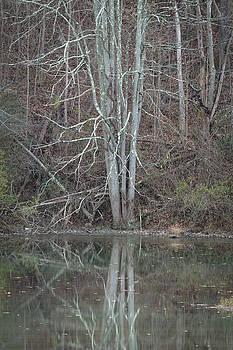 Fall tree reflecting by Steve Konya II