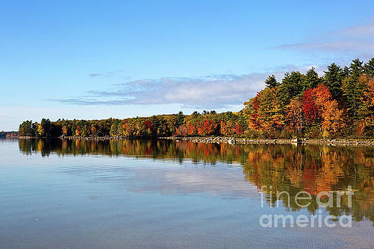 Fall Tree Reflections Lake Sabago Maine by Steven Frame