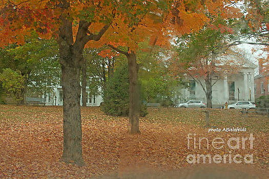 Fall Trees by April Bielefeldt
