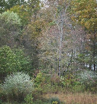Fall Trees in the Rain by Steve Konya II