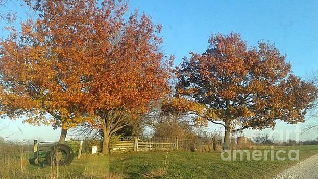 Fall Trees by Joe Leahy
