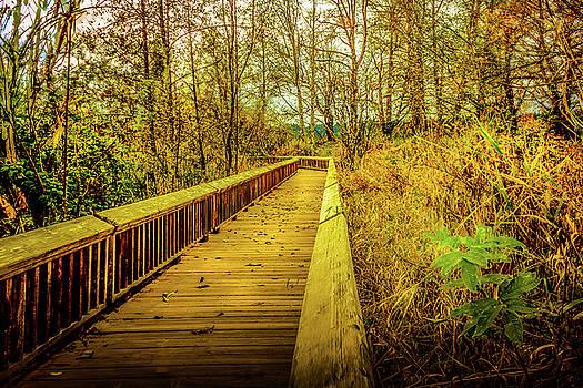 Barry Jones - Fall Walk - Woodland Landscape