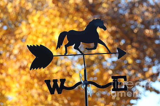Fall Weather Vane by Sheri LaBarr
