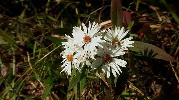 Fall Wild Flowers by Karen Roberson