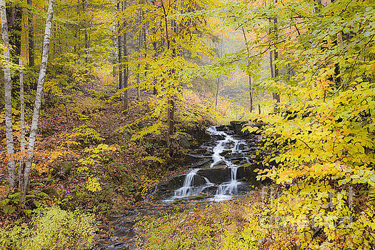 Fall Woodland Waterfall by Alan L Graham