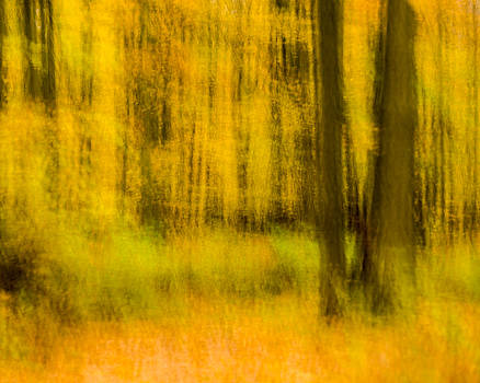 Fall woods by Paul Duncan