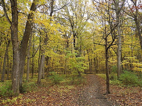 Fall Woods by Red Cross