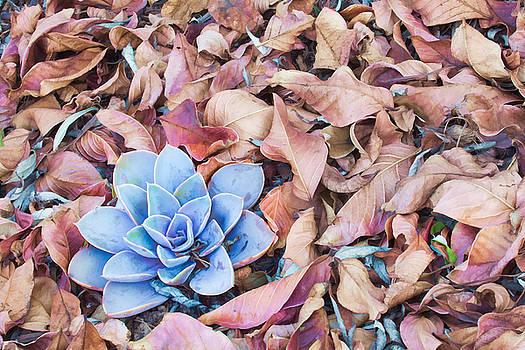 Fallen Autumn Leaves by Ram Vasudev