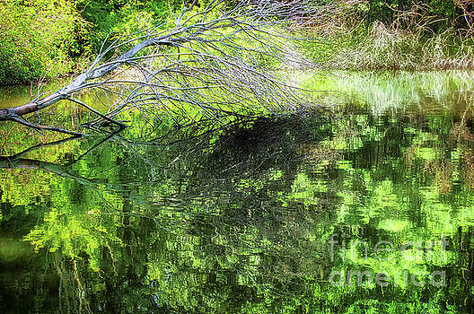 Fallen Branch for Monet by John Castell