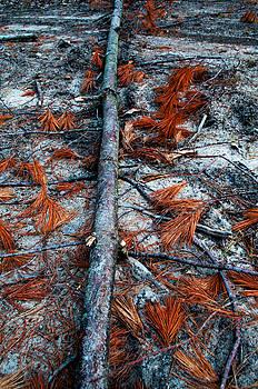 Fallen Branch by Samantha Boehnke