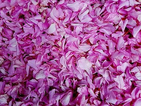 Colin Drysdale - Fallen Cherry Petals