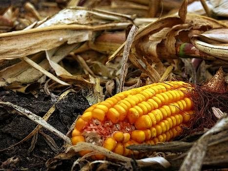 Kyle West - Fallen Corn