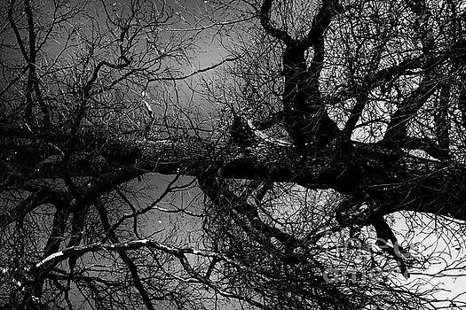 Fallen Dark Wood Forest by Benjamin Wiedmann