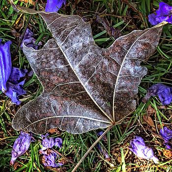 Fallen by Deborah Ann Stott