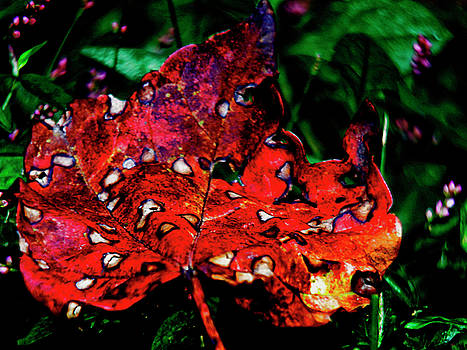 FALLEN RED LEAF Wall Art by Carol F Austin