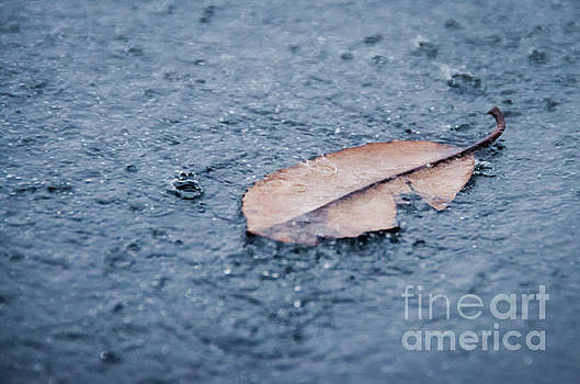 Fallen Leaf In The Rain Color Nature Photograph by Melissa Fague