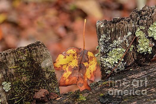 Fallen Leaf by John Greco