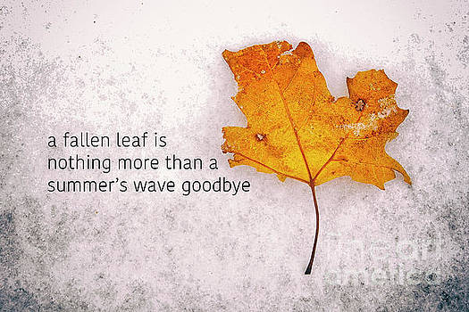 Fallen leaf on dirty ice with quote by Giuseppe Esposito