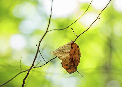 Fallen Leaf on Green by Brooke T Ryan