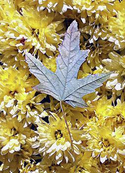 Fallen leaf on mums by Steve Karol