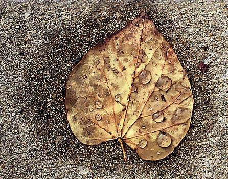 Fallen leaf by Steve Karol