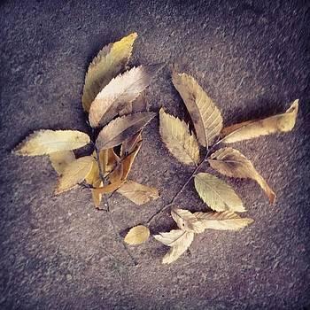 Fallen Leaves... <3 Follow Me <3 by Shyann Lyssyj