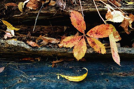 Fallen Leaves by Juli Ellen