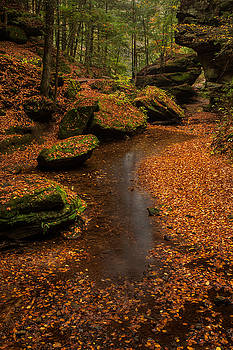 Rick Strobaugh - Fallen Leaves on the Ground