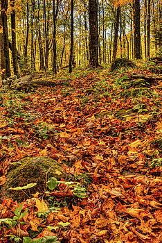 Dale Kauzlaric - Fallen Leaves On The Ice Age Trail