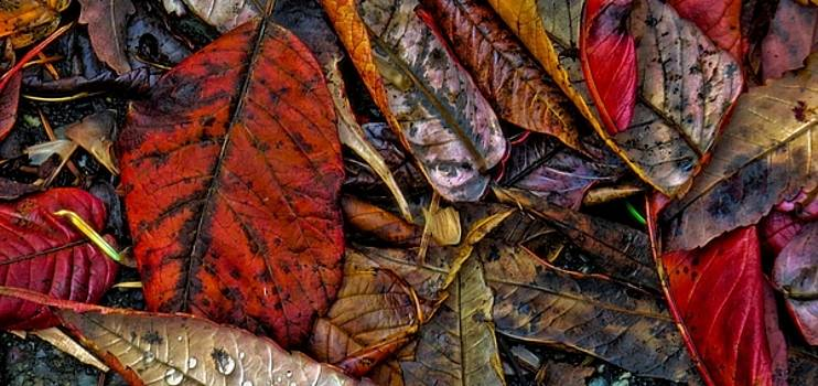 Fallen Leaves by Rick Lawler