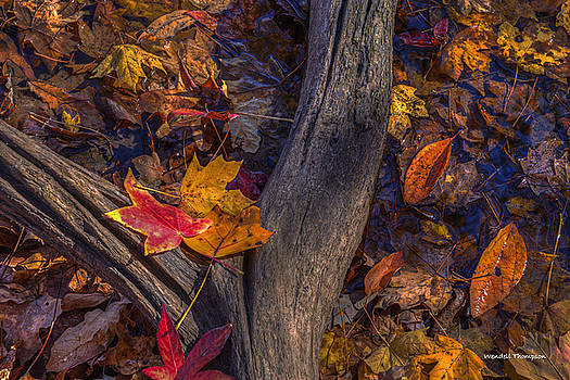 Fallen Leaves by Wendell Thompson
