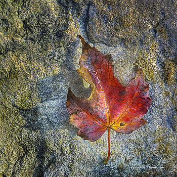 Fallen Maple Leaf by Wendell Thompson